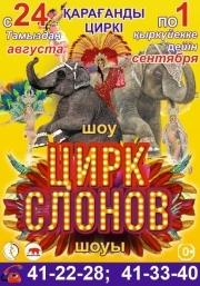 Цирк слонов в Караганде