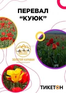 Тур «Куюк» от компании «Золотой Караван»