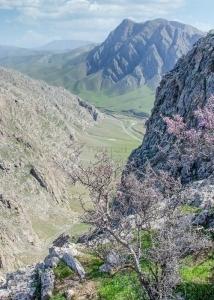 Весенняя Кашкадарья