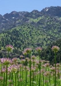 Нетронутые леса Синегорья