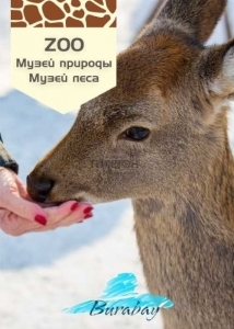 Музей природы – «Животные в естественной среде обитания»